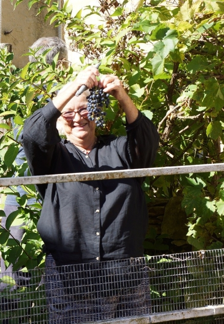 Grapes growing at the entrance gate to La Vieille Grange